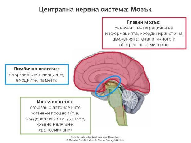 Central nervous system_bg_1